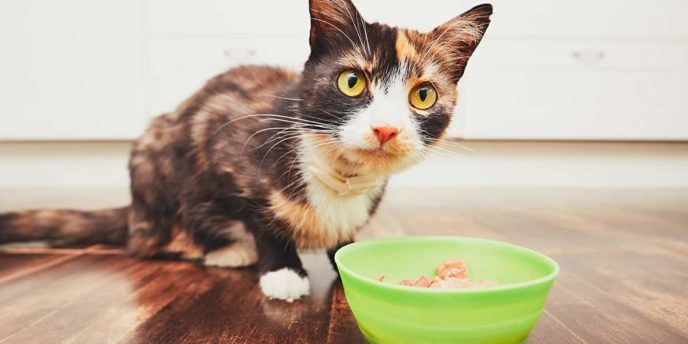 Cat eating gluten free pet food